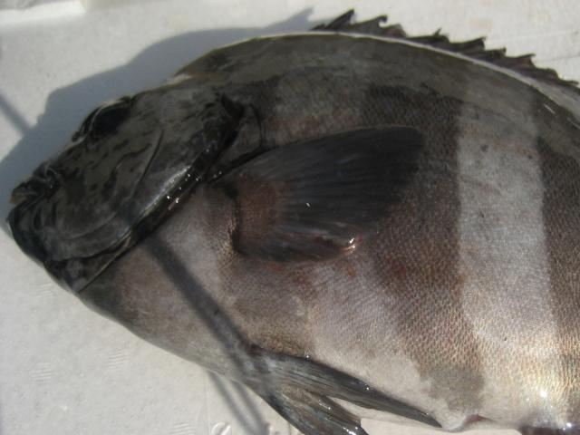 石鯛のおいしい食べ方・石鯛のお吸い物