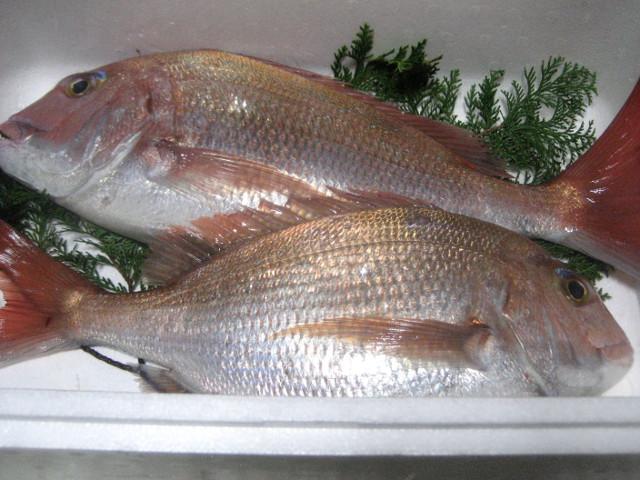 鯛料理の定番レシピ・桜鯛の刺身の四種盛り